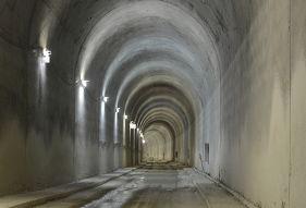 Danya cebus - Gilon Tunnel